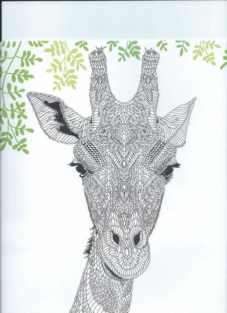 55 Best Giraffe Images On Pinterest
