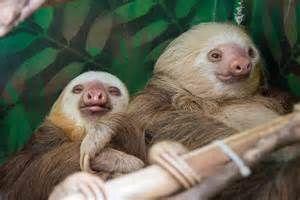 Sloth Sanctuary Puerto Limon Costa Rica