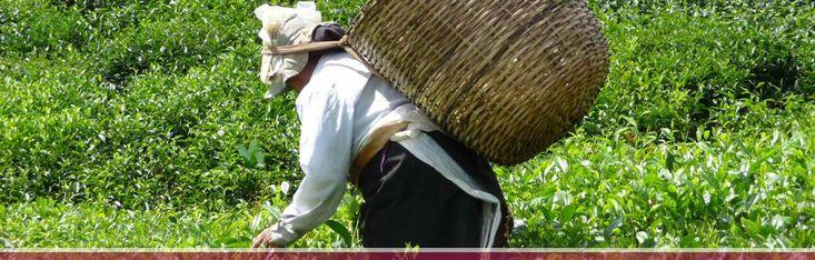 Negozio specializzato nella vendita di tè con oltre 200 varietà. Puoi trovare anche tisane, infusi, caffè di mono origine e aromatizzati e anche cioccolato artigianale!