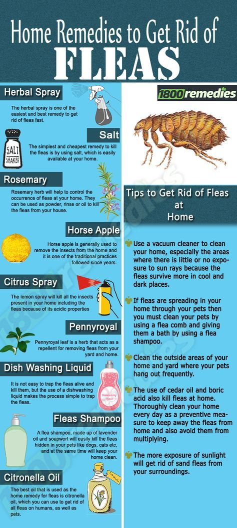 Remedies to get rid of fleas. More