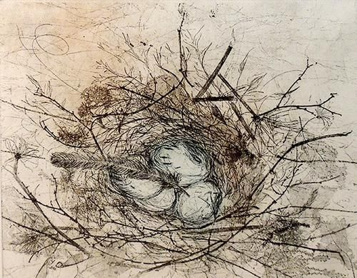 Line Drawing Nest : Best nesting images bird nests birdhouses and