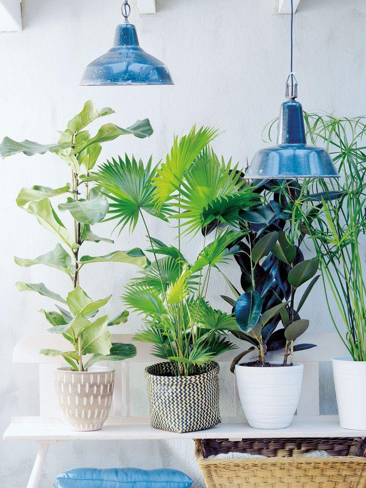 208 besten garten balkon pflanzen bilder auf pinterest for Zimmerpflanzen dekorativ