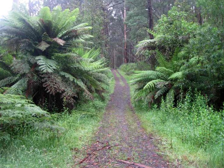 Olinda Forest - Dandenong Ranges