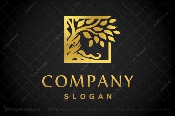 Logo for sale: Golden Branch Logo