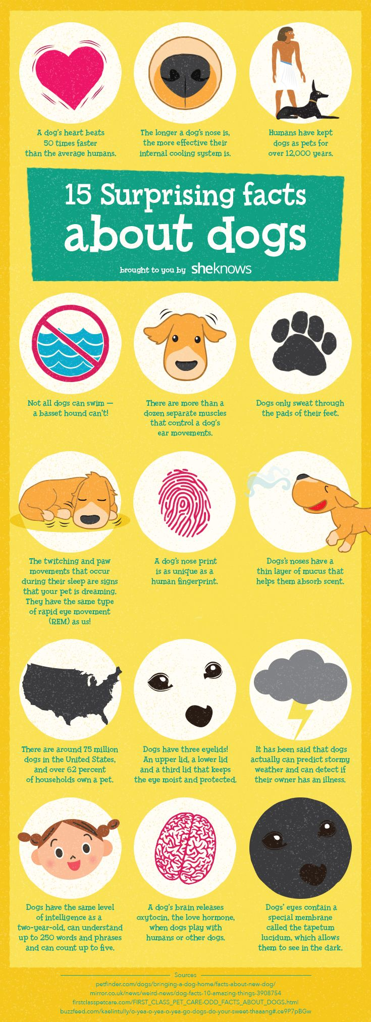 Amazing dog facts that will make you love your pup even more