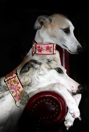 Pink Dog Collars, Martingale Collars, Greyhound - Posh Pawz.com