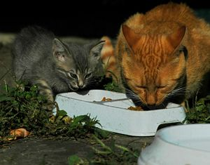 Feed my pets online gives you some important information for your pets about natural cat food, cat food, best cat food, healthy cat food, homemade cat food and right cat food.