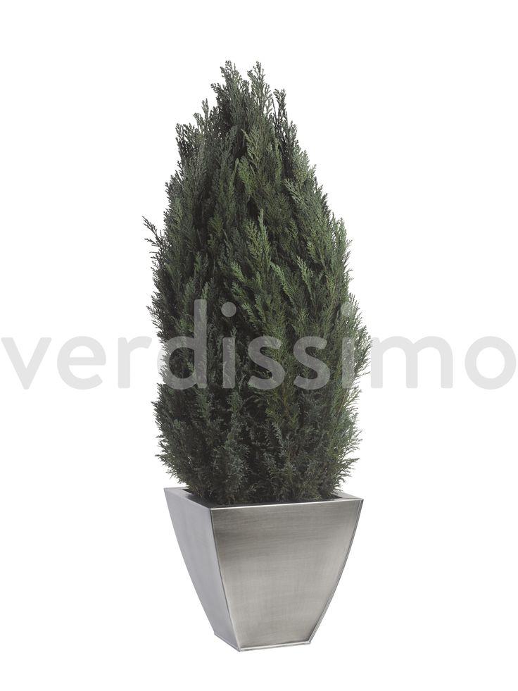 Thuja Topiary