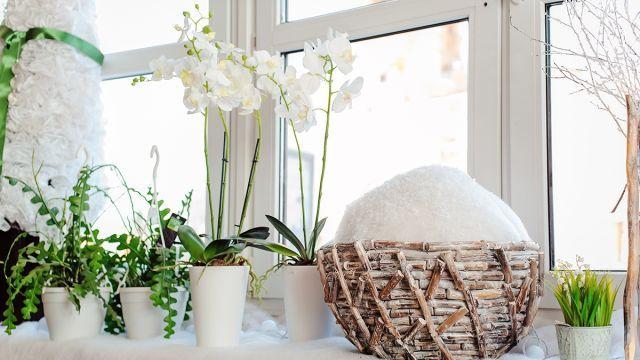Odkvitla vám orchidea? 2 tipy, ako ju znovu oživiť: Skúste jej spôsobiť malý šok, určite to zaberie   Casprezeny.sk