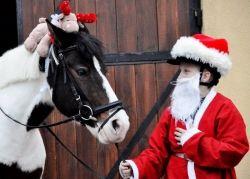 Jeśli chcecie ciekawie spędzić tegoroczne Mikołajki to zapraszamy już 7 grudnia do stadniny koni Manor House, gdzie zarówno Duzi jak i Mali będą mogli skorzystać ze specjalnie przygotowanych na tę okazję atrakcji. Szczegóły na temat Mikołajkowego spotkania na naszej stronie :)