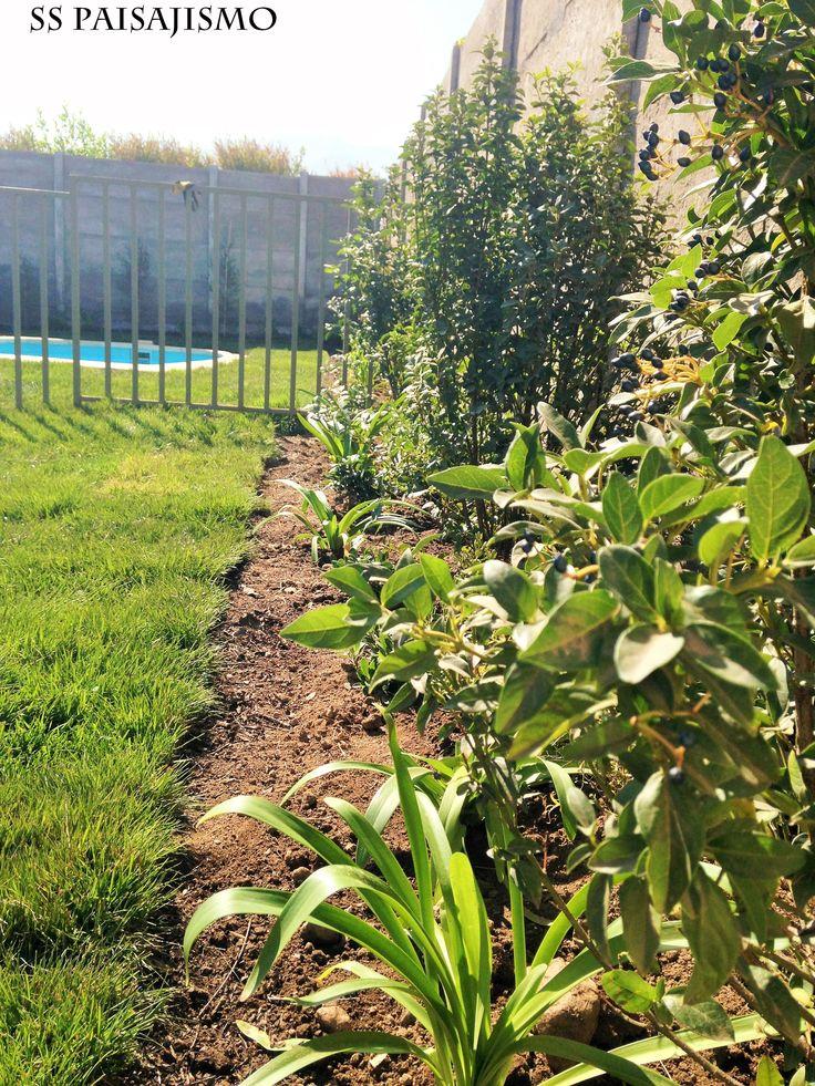 Proyecto jardín Particular Chicureo. Laurentinas, agapanthos, son algunas de las especies utilizadas en el perímetro del jardín.