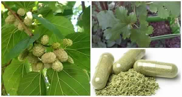 Cette plante est indiquée pour tout le monde mais vous n'avez aucune idée qu'elle peut traiter les tumeurs, le diabète et l'hypertension artérielle