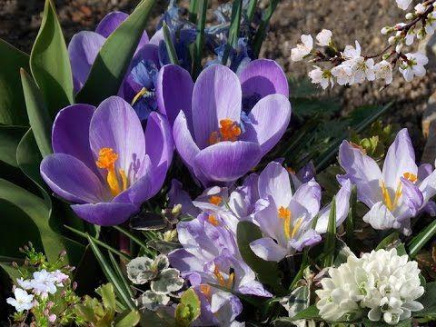 """Tchaikovsky  """"Waltz of the Flowers"""""""