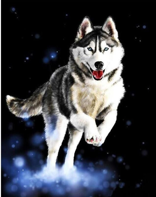 Running Huskies Paint By Numbers Us Siberianhusky Siberian