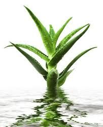 Aloe Drinks | Aloe Healthy Life USA