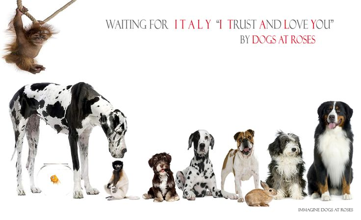 Dog lovers campaign by Dogsatroses #dog #collars #leashes www.dogsatroses.com