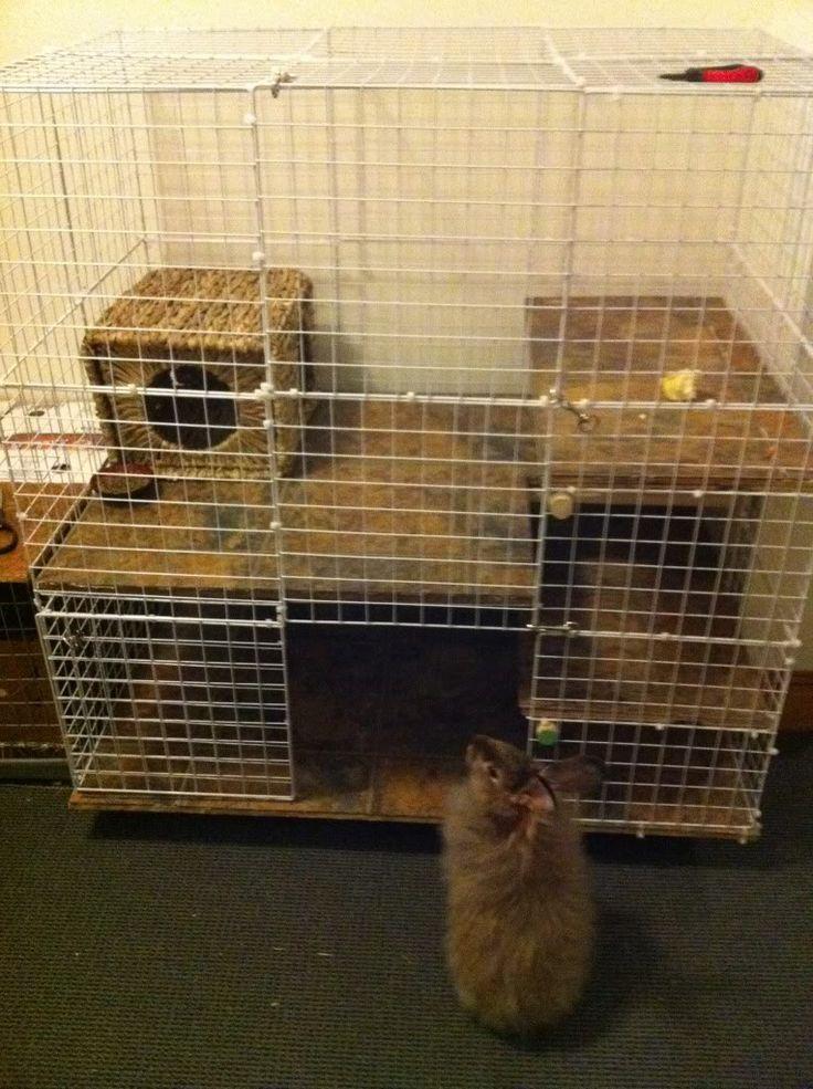 Do you have a Bunny Room? - BinkyBunny.com - House Rabbit Information Forum - BinkyBunny.com - BINKYBUNNY FORUMS - THE LOUNGE