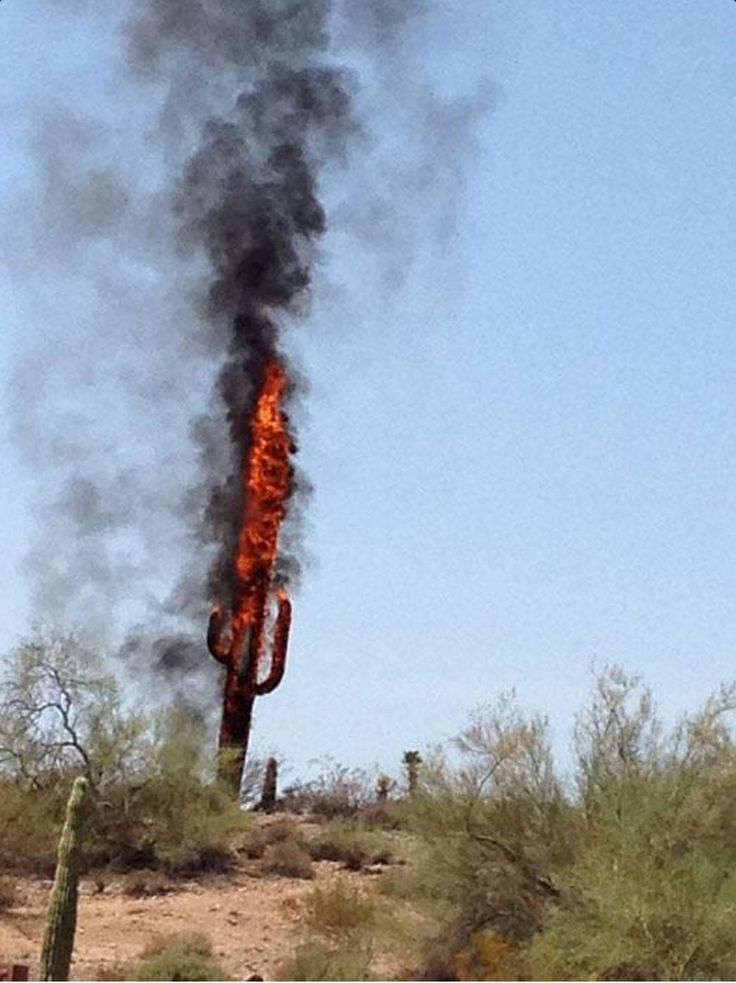 Fake cactus cell tower on fire. | Interesting Cell Tower ...