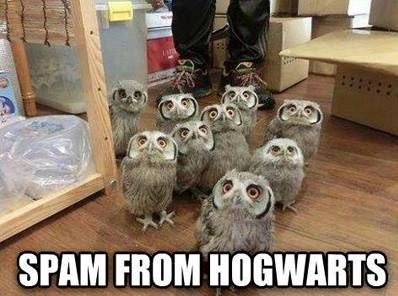 Spam owls lol