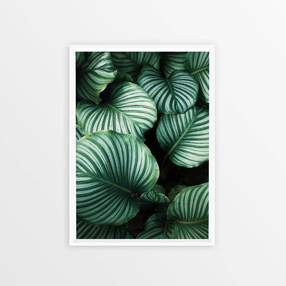 Tropical Plant Print Plant Photography Digital Art Exotic