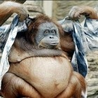 Funny Fat Animals