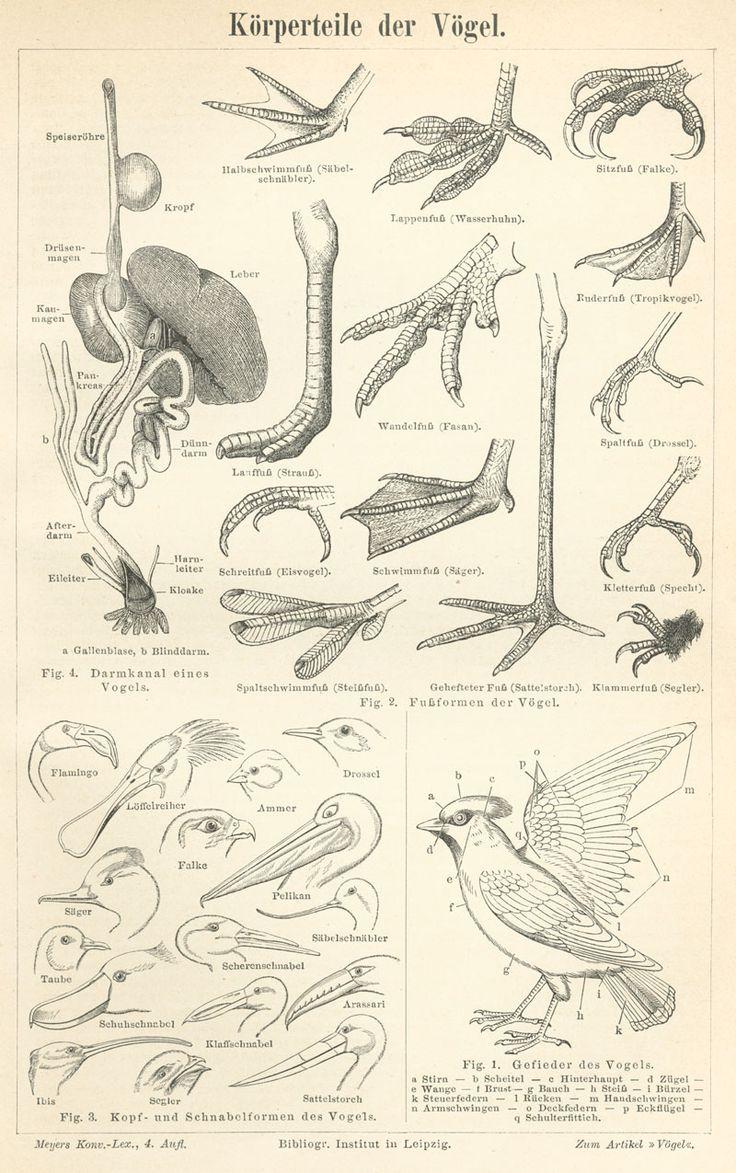 74 best BOTANIKA images on Pinterest   Botanical drawings, Planks ...