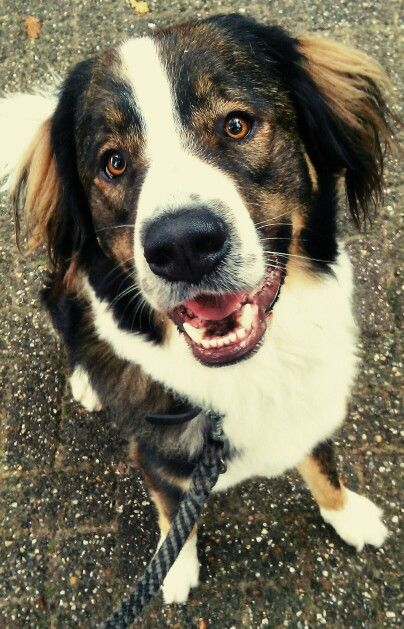 #dog #dogs #animal