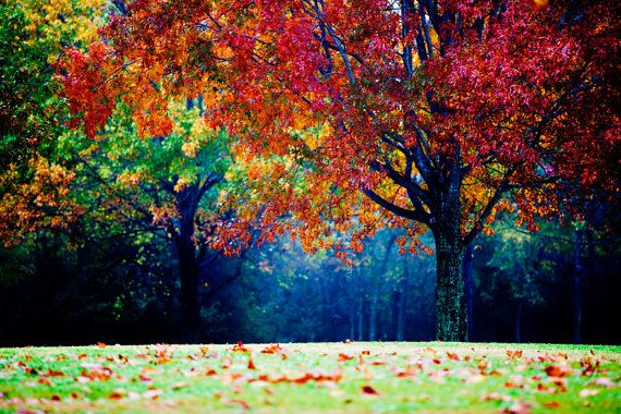 Colorful landscape photography autumn tree fog and - Colorful nature pics ...