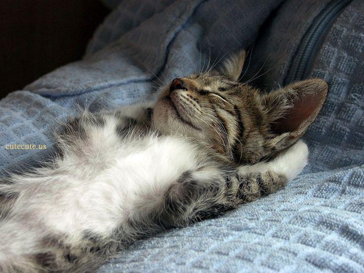 baby cat sleeping: Cats, Kitty Cat, Animals, Pets, Cat Naps, Adorable, Kittens, Sleeping, Kitties