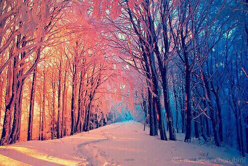 1103 best Hearts in nature images on Pinterest   All alone ...   Hearts In Nature Winter