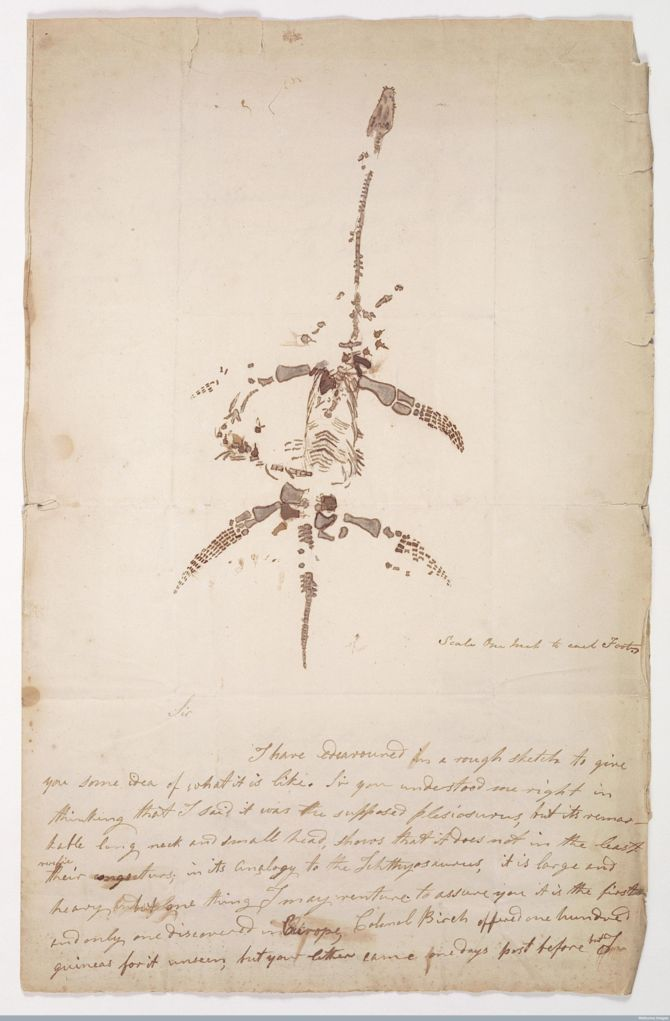 A letter from Mary Anning showing a sketch of a plesiosaurus and a - collection letter