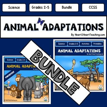 Primary homework help adaptations