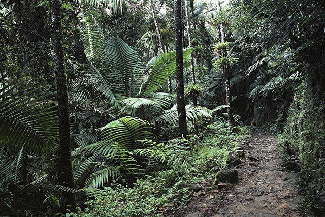 Destinations Puerto Rico - El Yunque National Forest