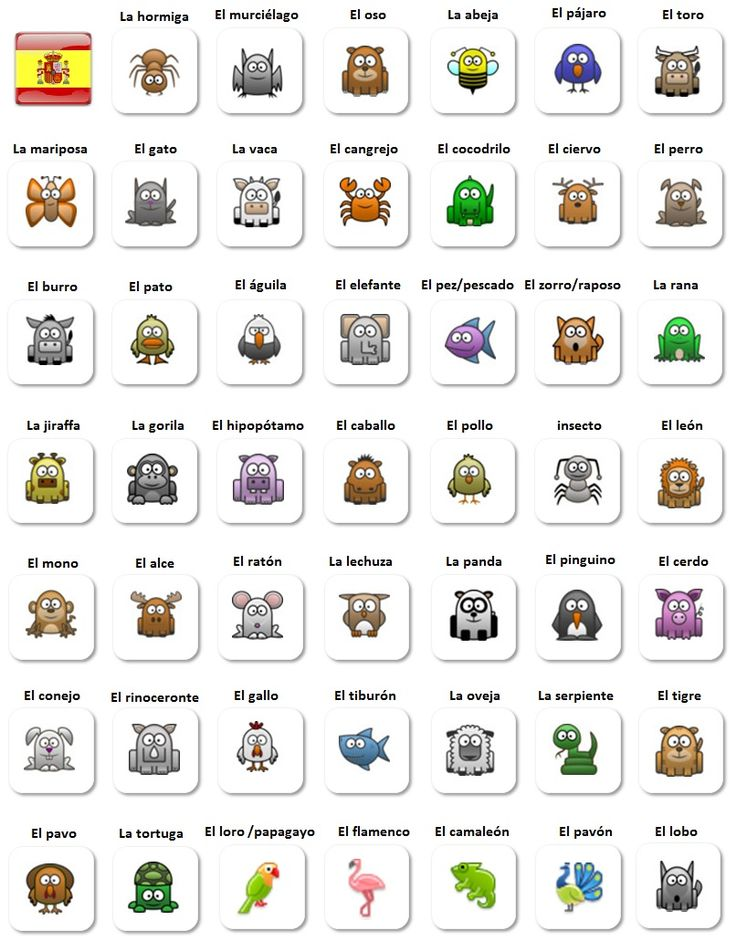 los animales spanish animals vocabulary for beginners spanish vocabulary - Living Room Candidate Lesson Plan