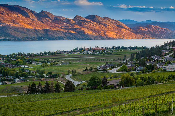 Au pays de la vigne: La vallée d'Okanagan. Mathieu Dupuis
