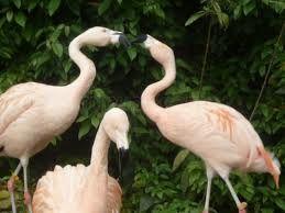 zoologicos en santiago -
