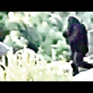 ThinkerThunker: A Closer Look Bigfoot filmed Independence Day