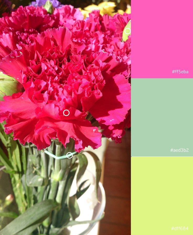 Rosa (1) Verde (3) Verde (4)