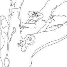 Australopithèque dans un arbre