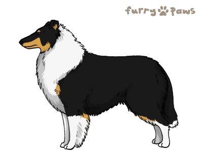 Furry Paws // WCH Kip's Fanta [Lla 2xStm 23HH - 1.467] 7.4's Kennel