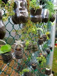 This vertical succulent garden could be a fun and easy way to bring plants into an outdoor classroom and teach students about gardening.