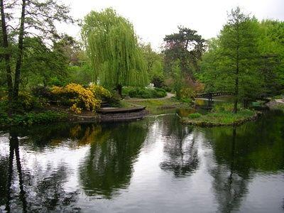 How+to+Design+a+Backyard+Fish+Pond+
