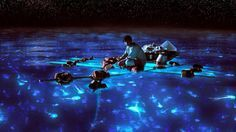 Hopkins, Belize's Bioluminescence Night Tour: Dip Your Hand into the Burnin' W
