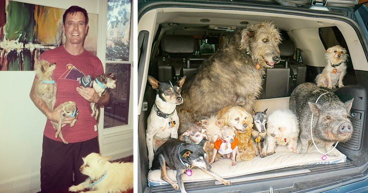Man Devotes His Life To Adopting Old Dogs Who Can't Find Forever Homes | Bored Panda