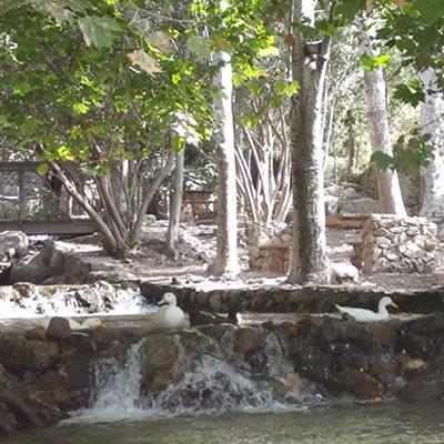 Ducks on the river - Arroyo de Celin