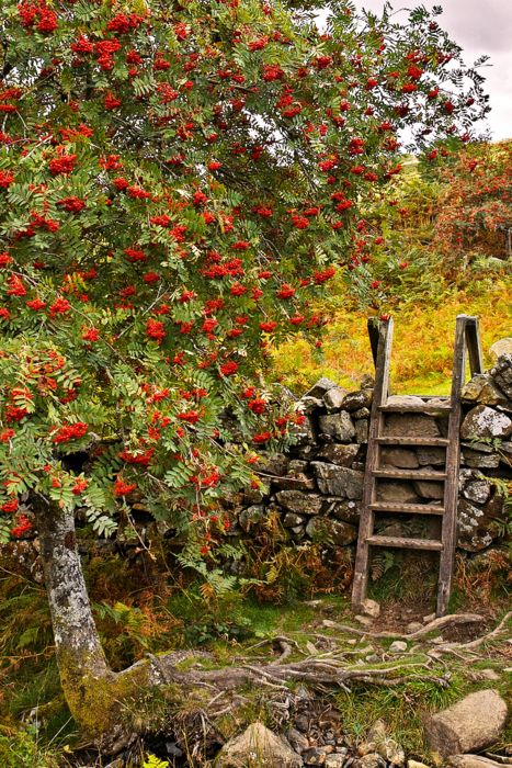 An old fashioned way to cross over a stone wall...without the need for a gate.  Often seen in countrysides with stone walls.  Think New England and British isles.