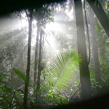 Taman Negara - Jungletour - Maleisie - Stopover - Combi-reis - Bali Travel -