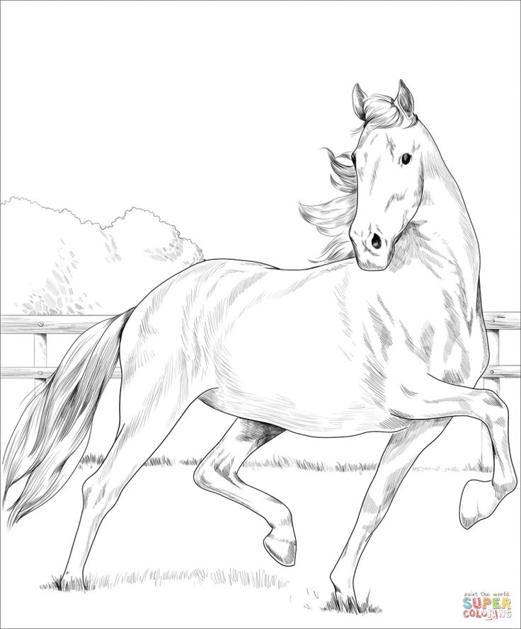 Free Printable Coloring Pages Pertaining To Free Download Printable Westphalian Horse Coloring Page Horse Coloring Pages Animal Coloring Pages Horse Coloring