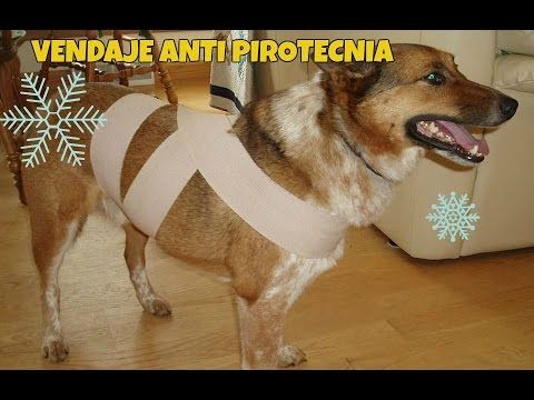 Contribución animal/ vendaje anti pirotecnia- YouTube