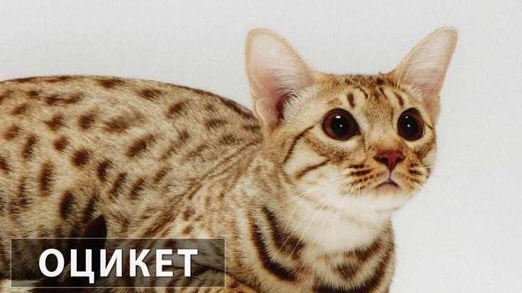 египетские кошки: 21 тыс изображений найдено в Яндекс.Картинках